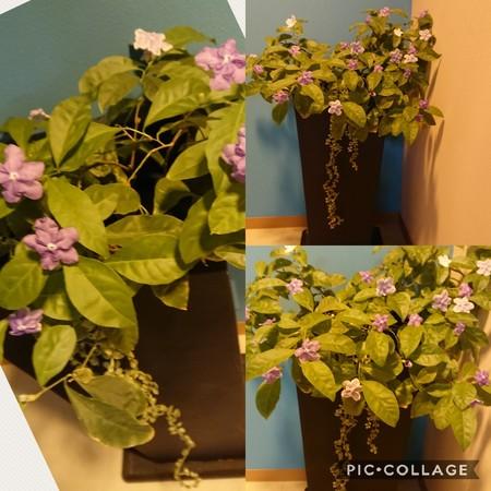 Collage 2018-04-26 15_23_57.jpg